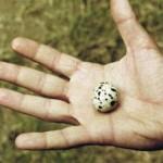 യുമൂര്ത്ത: ആത്മസമര്പ്പണത്തിന്റെ ഛായ