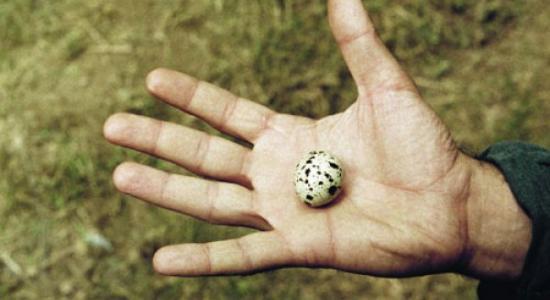 yumurta photo